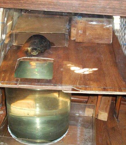 Черепаха в новом домике