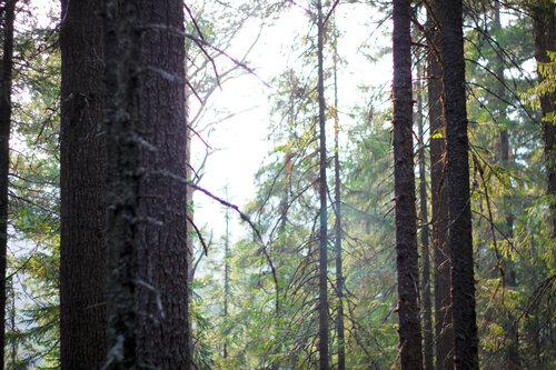 Лес кругом