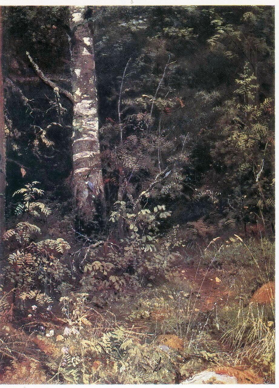 Шишкин Берёза и рябинки. Этюд. 1878