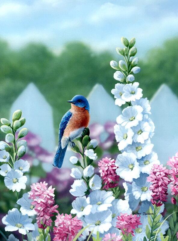 Весна и лето. Bradley Jackson. Птицы.