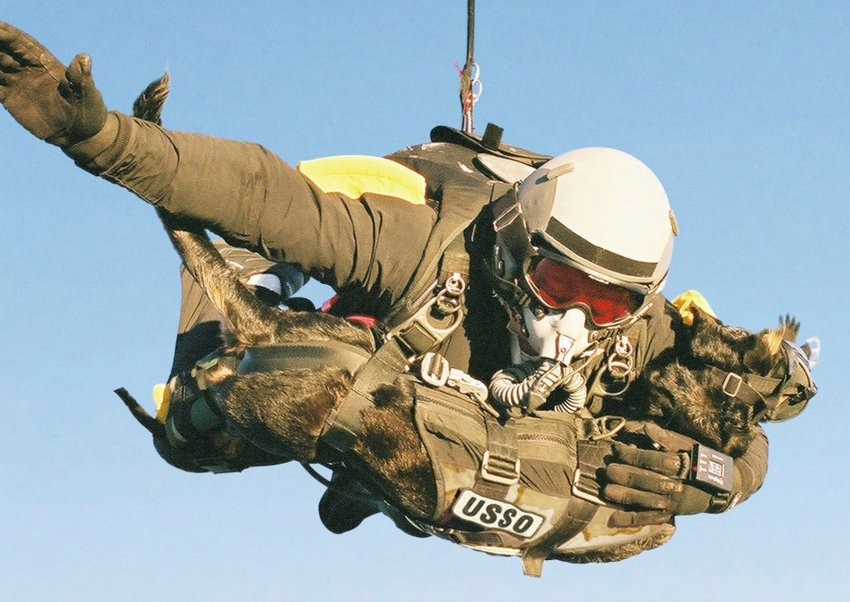 Handout image shows a US Military Member and his dog parachuting from 30,100 feet