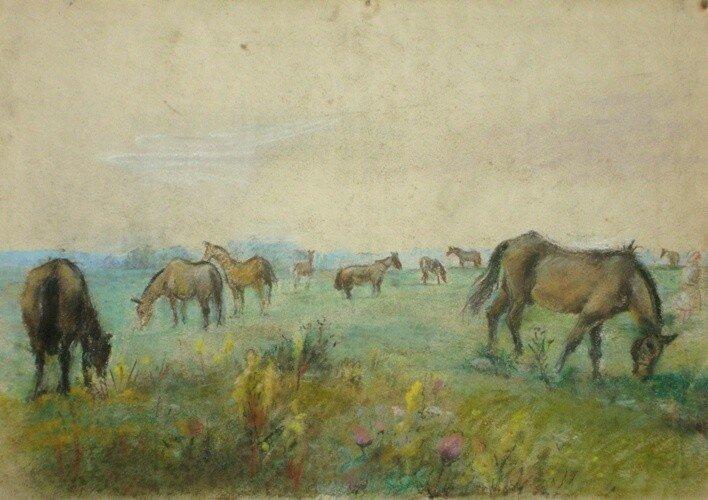 zirgi-ganibas_433.jpg