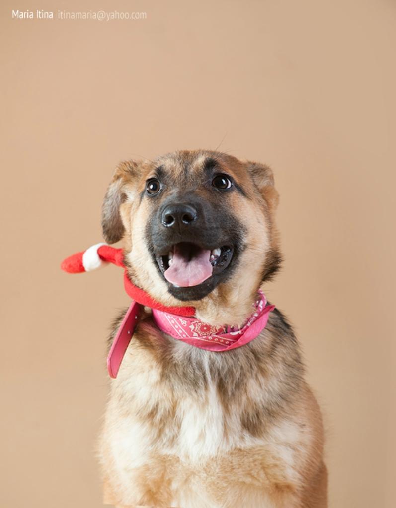 Фафи собака из догпорта