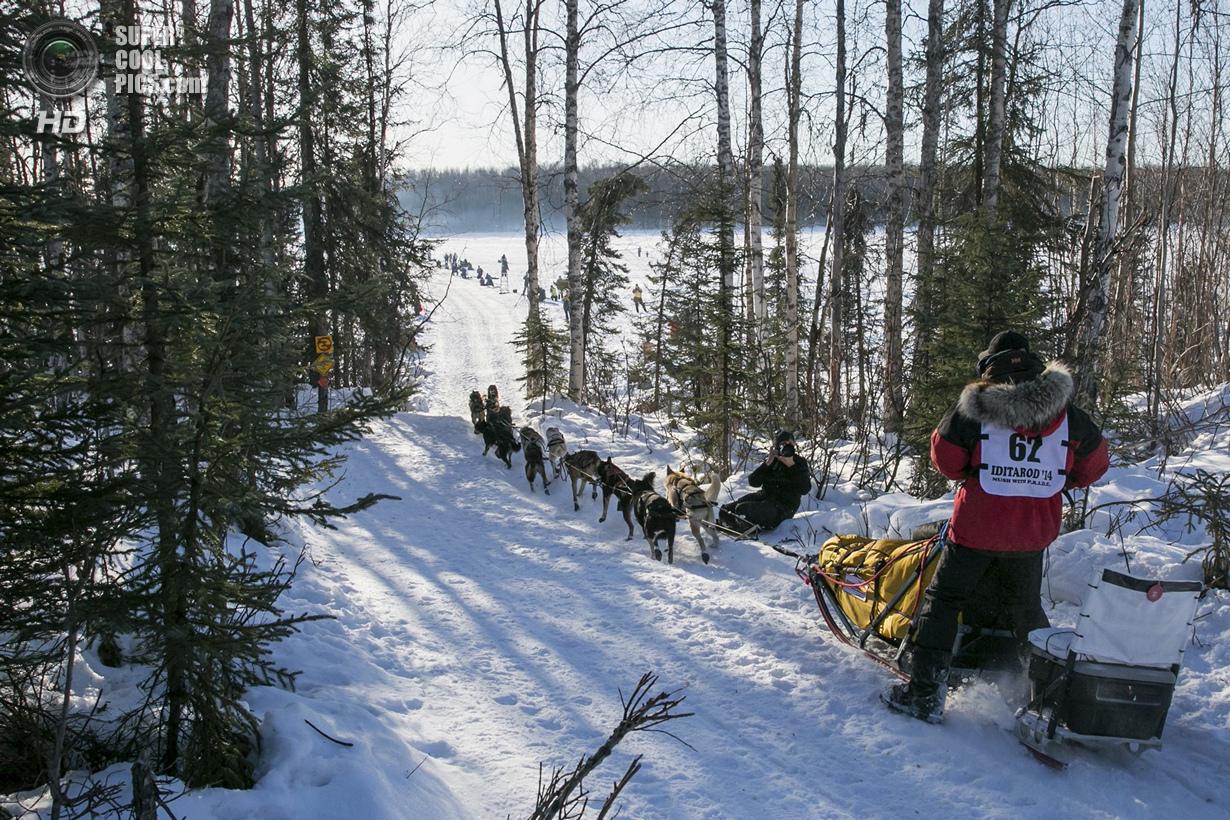 США. Уиллоу, Аляска. 2 марта. Дэнни Сивей и его упряжка. (REUTERS/Nathaniel Wilder)
