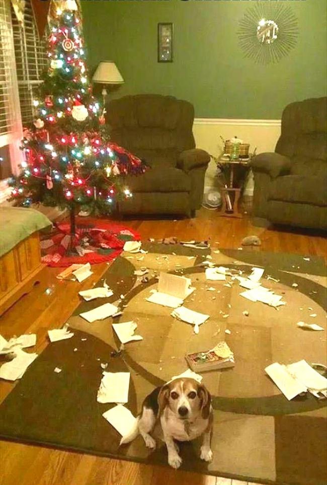 Это кот виноват! Явсе видел!