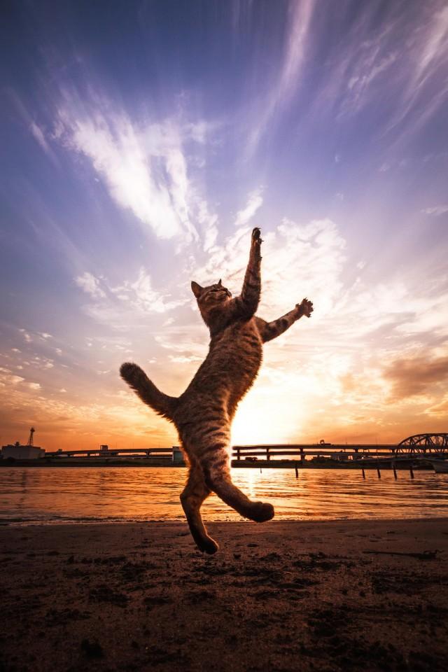 15.  Кошки не могут жевать большие куски пищи, так как их челюсть из-за строенияне способна