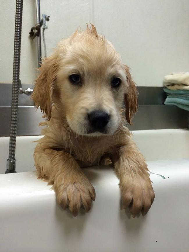 Тогда отец Молли, ветеринар, придумал отличное решение: поставить щенку брекеты.