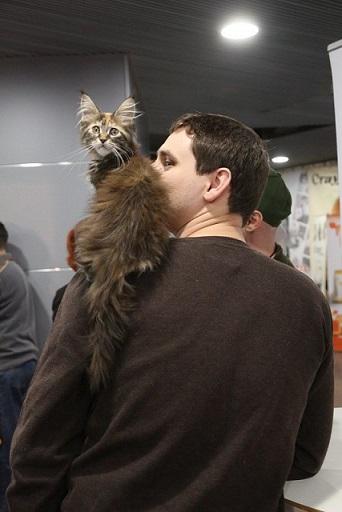 Кот на плече.jpg