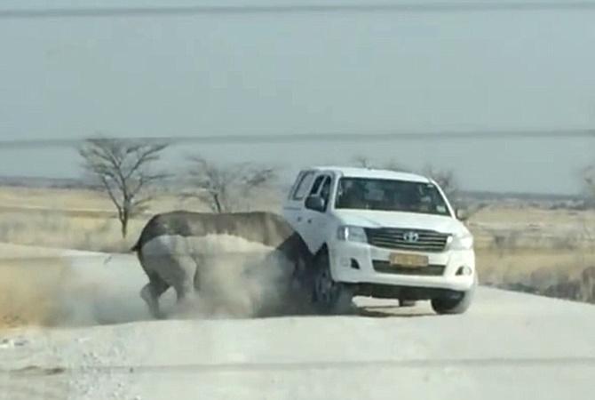Страшные кадры: носорог протаранил машину стуристами