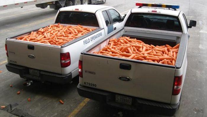 В США пытались ввезти крупную партию марихуаны под видом моркови