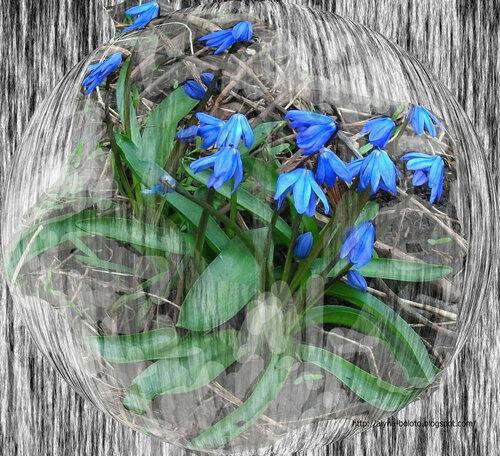 Весна прорывается