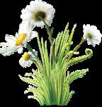 цветы (158).png