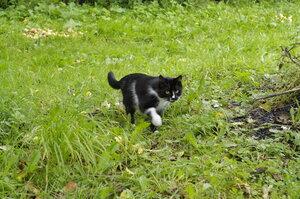Кот в яблочном саду