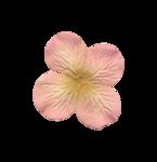 Palvinka_FlowerAdventure_flower9.png