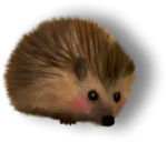 NLD Hedgehog sh (2).png