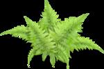 Forest_Scent_Zalinka_el (46).png