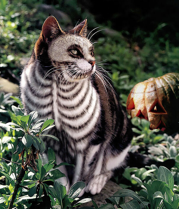 Раскрашенные коты, или мой хозяин идиот