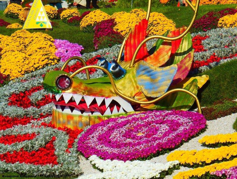 Выставка цветов осень 2012 в Киеве.