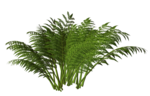 R11 - Nature Time 1 - Fern - 002.png