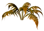 R11 - Nature Time 1 - Fern - 008.png