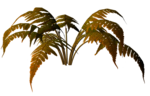 R11 - Nature Time 1 - Fern - 009.png