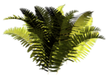 R11 - Nature Time 1 - Fern - 015.png