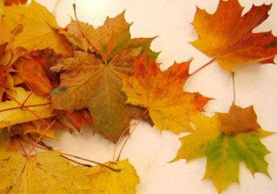 Из кленовых листьев своими руками