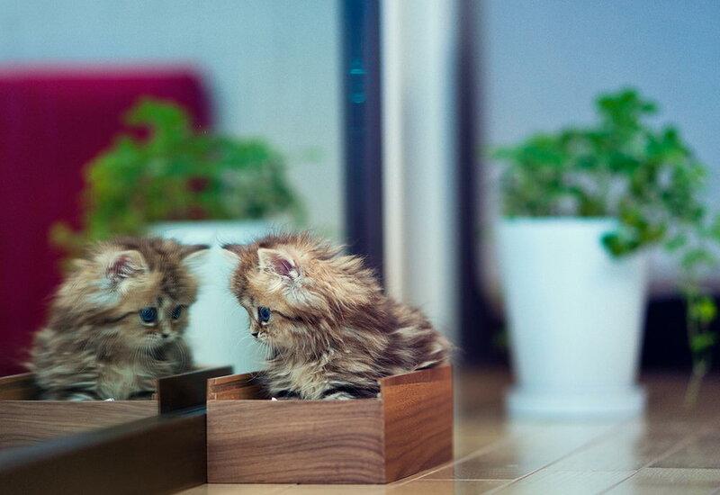 Самый симпатичный в мире котенок