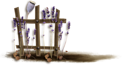 «Kimla_LavenderStory» 0_90249_1c7393e3_L