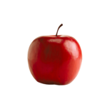 Renadesigns_forestfruits_el4.png