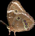 feli_nb_butterfly.png