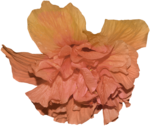 feli_nb_flower.png