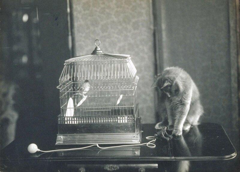 Джесси Тарбокс Билс — первая женщина-фотограф, работы которой публиковались. Она также любила снимать котиков