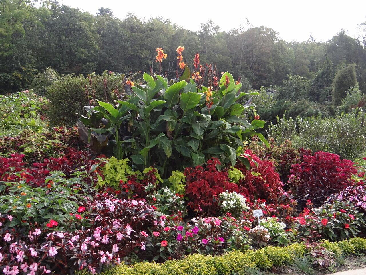 Осень. Ботанический сад. Владивосток.