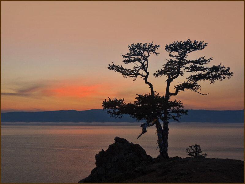 Священное дерево желаний