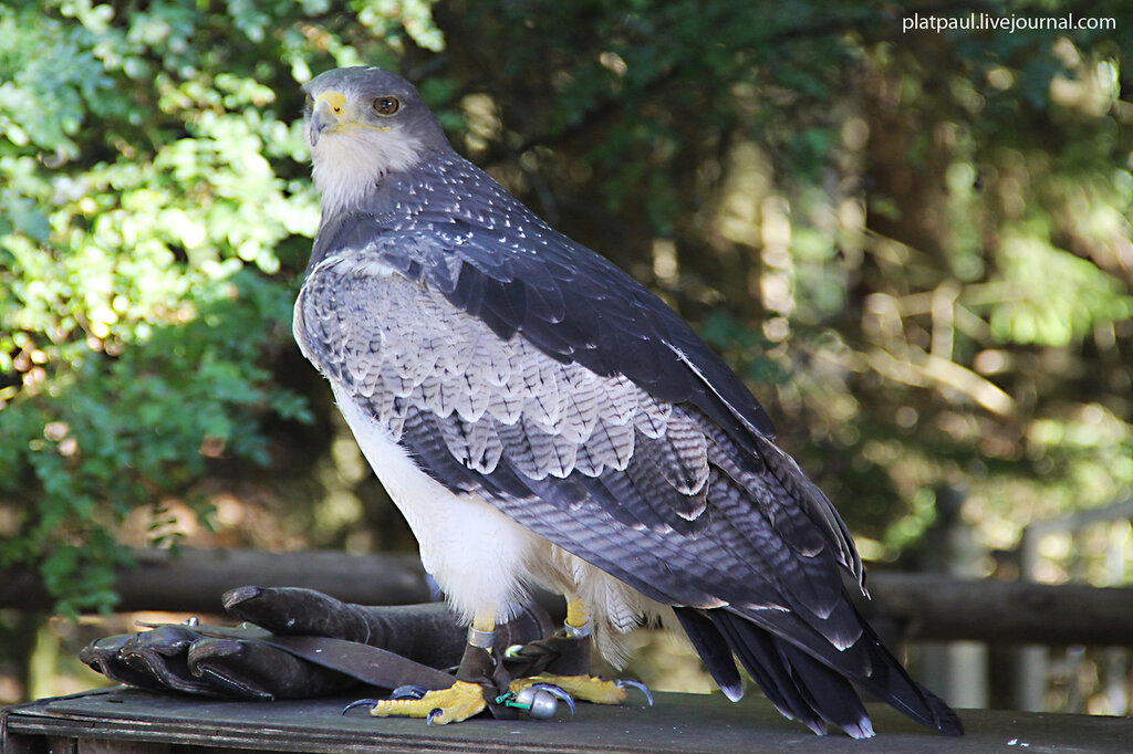 Заповедник в Айфеле - хищные птицы