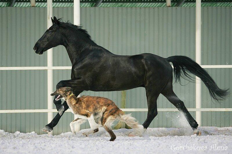 Мои любимые лошади...
