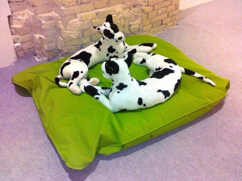Инсталляция Собаки