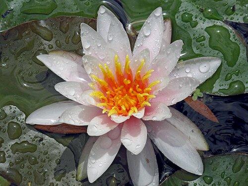 Лето, с.Остров, цветы райского садика