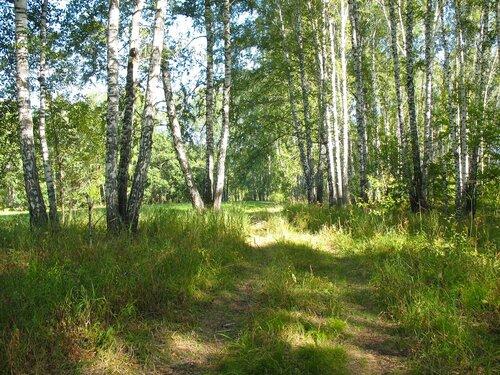 Лесной проезд