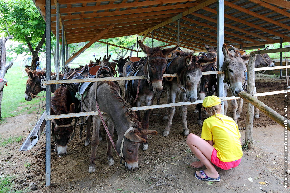 Крым ферма Чудо-ослик