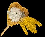 цветы (25).png