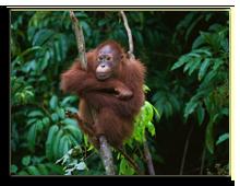 Малайзия. о.Борнео. Фото Depositphotos