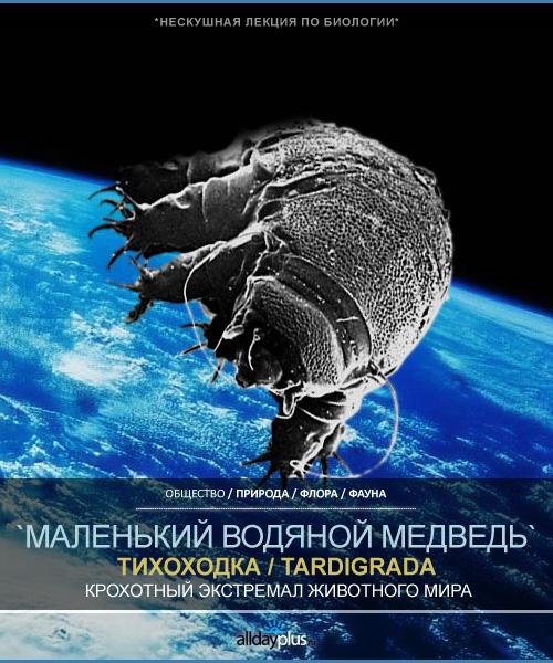 Экстремофилы-тихоходки / Tardigrada. Самые выживаемые существа на земле. 18 фото