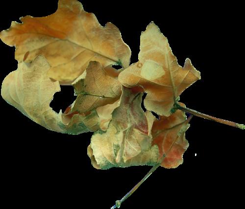 «Autumn Glow» 0_980c3_1f5b53c3_L