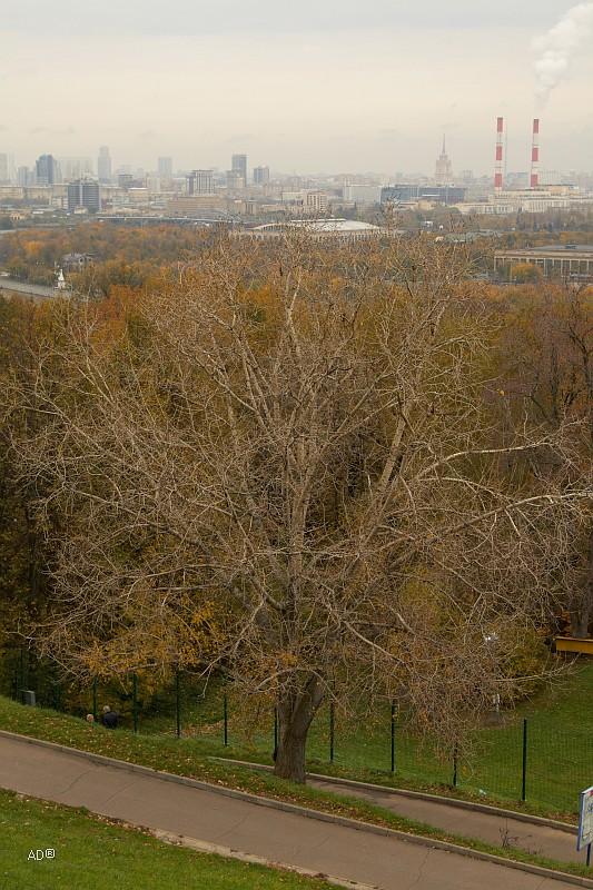 Осень на Воробьевых горах