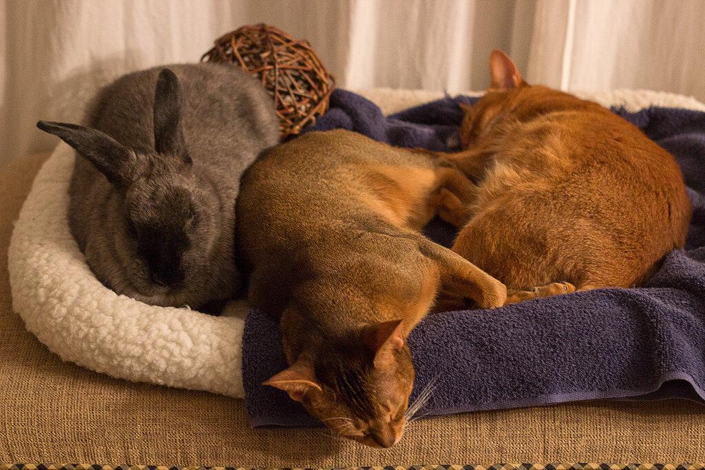 Прикольная картинка кошка и кролик