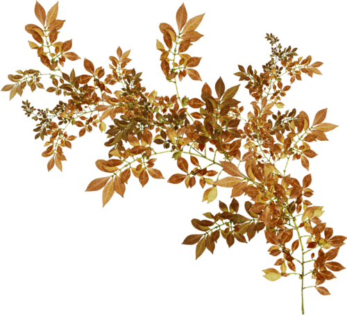 осень (170).png