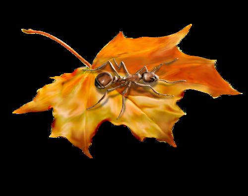 осень (250).png
