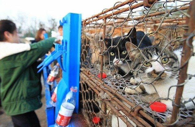 Полиция спасла 500 кошек